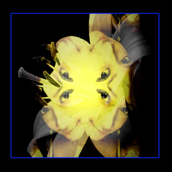Flower in Photo